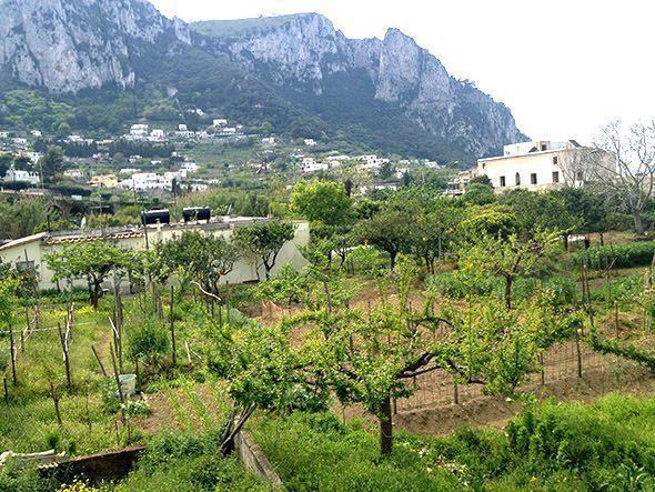 orchard capri