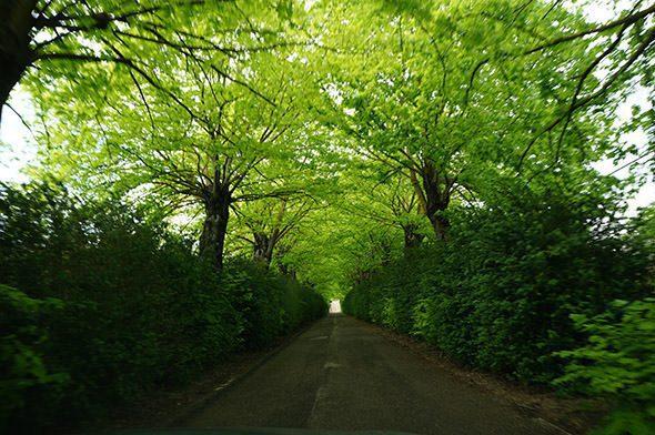 Green Veil Tuscany