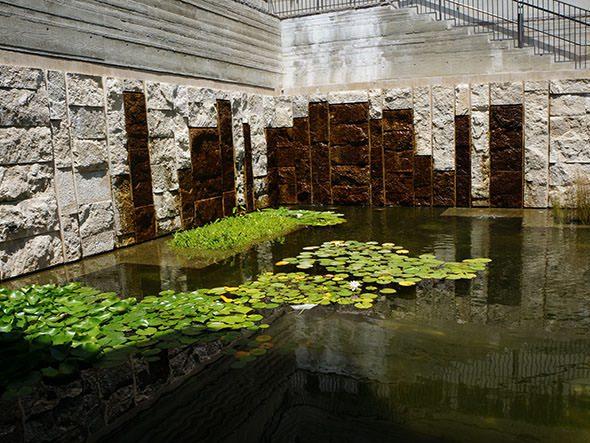 lily pond inside